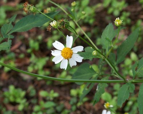 Daisy too 003aablog