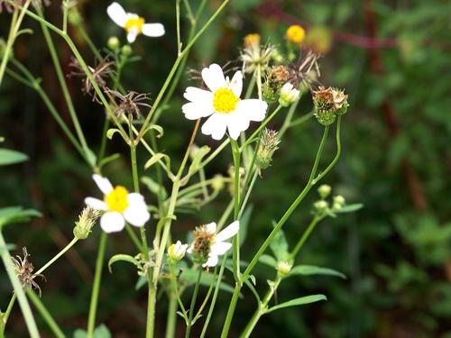 Daisy too 009ccblog