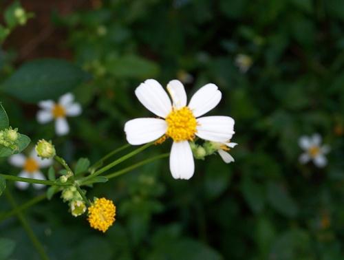 Daisy too 016ggblog