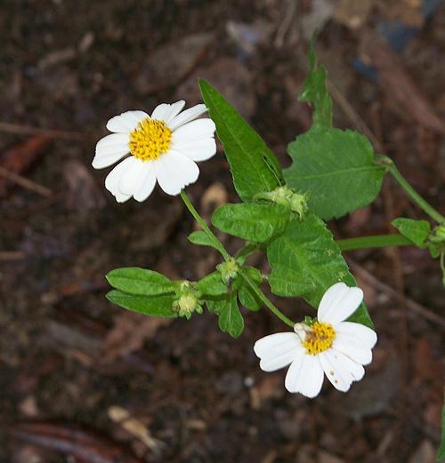 Daisy too 030kkblog